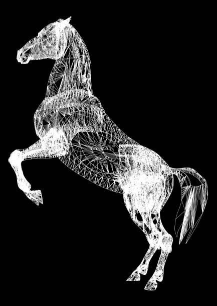 pferd – Foto