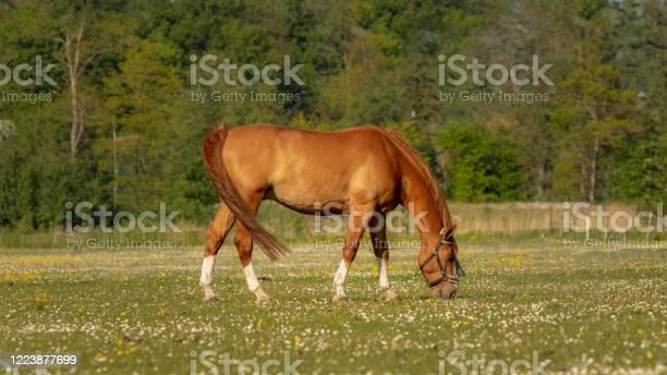 Horse picture id1223877699?b=1&k=6&m=1223877699&s=612x612&h=gmk iflveps9fz8yy2xvhoyza mzgkfkx7kwpvkdlbu=