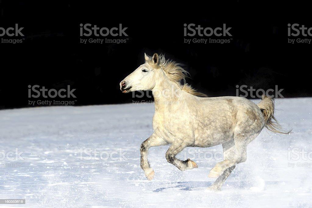 Horse royalty-free stock photo