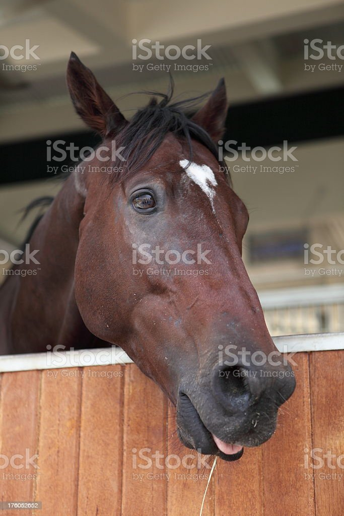 Horse (XXXL) royalty-free stock photo