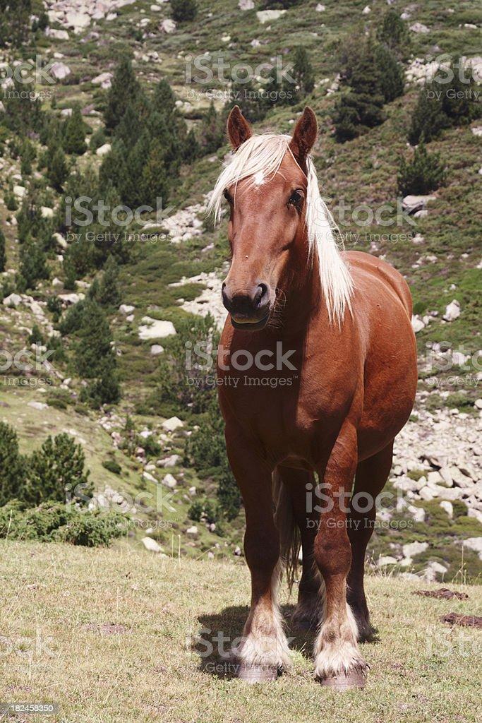 Cavalo foto royalty-free