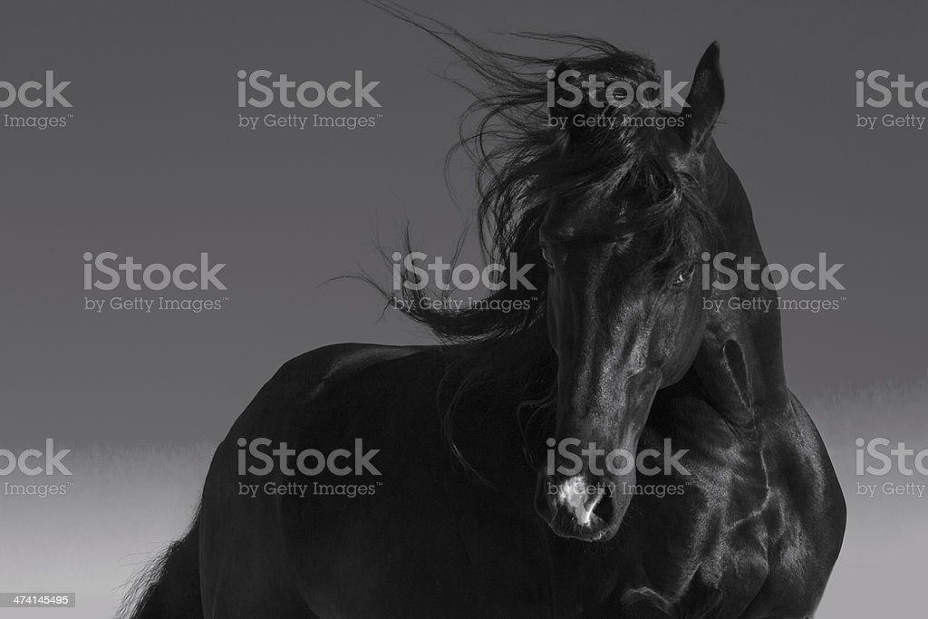 Koń – zdjęcie