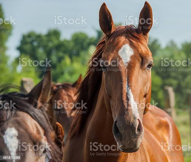 Horse picture id491870289?b=1&k=6&m=491870289&s=612x612&h=8ldeqpyunipmbjhp36 ftpifjusgaid tn6ghqh7990=