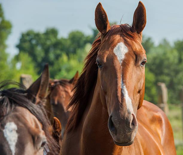 Horse picture id491870289?b=1&k=6&m=491870289&s=612x612&w=0&h=pgq5vwg i1euwwpz3eu7jgc40zmt2datel9orah9kve=