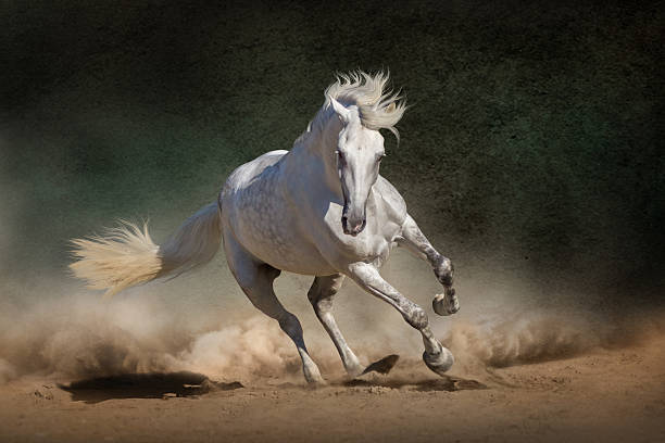 Horse – Foto