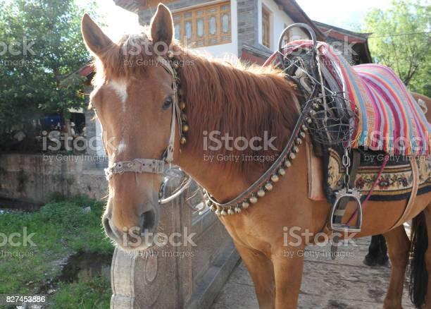 Horse picture id827453886?b=1&k=6&m=827453886&s=612x612&h=8i3nwdzosdeok4mrtt hyjrwzm04feijksutmy57hy8=