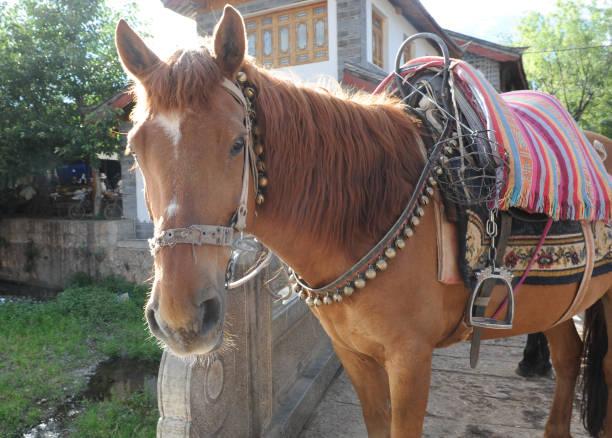 Horse picture id827453886?b=1&k=6&m=827453886&s=612x612&w=0&h=jqjubap8yzn bnmojj mne4kagnq936utmf4uzz u9s=