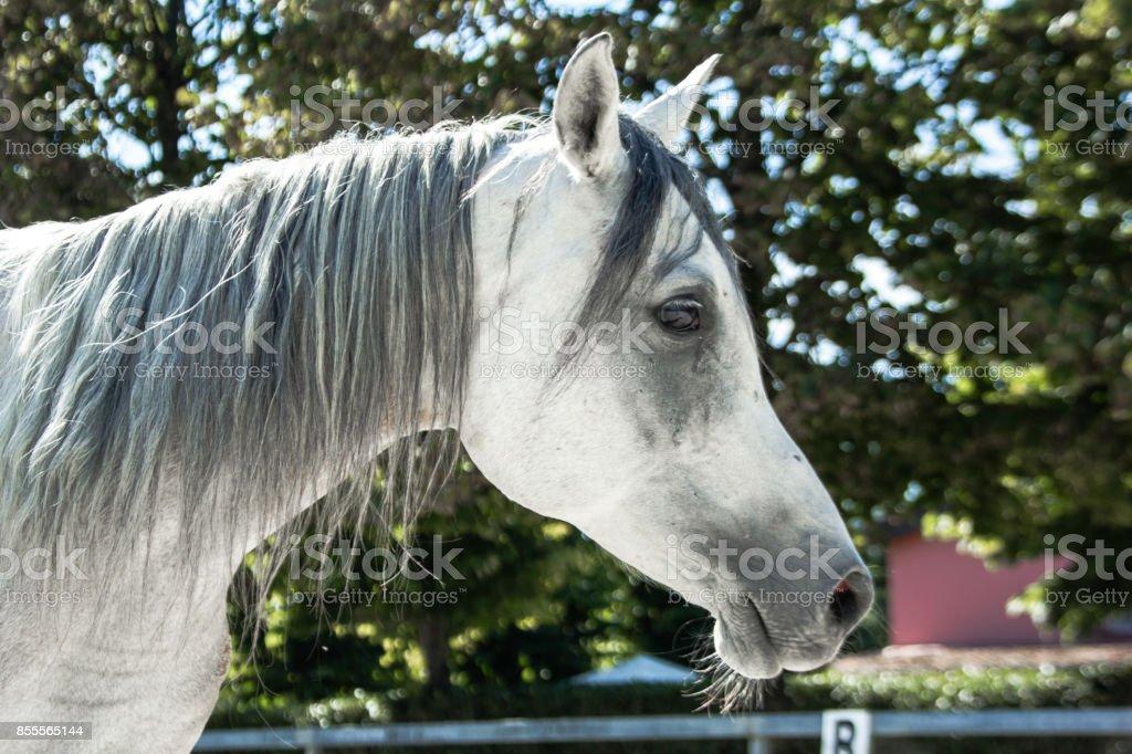 Horse (standing) stock photo