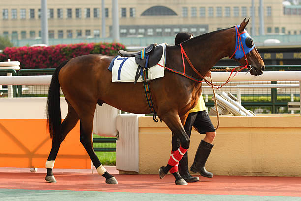 Horse  sha tin stock pictures, royalty-free photos & images