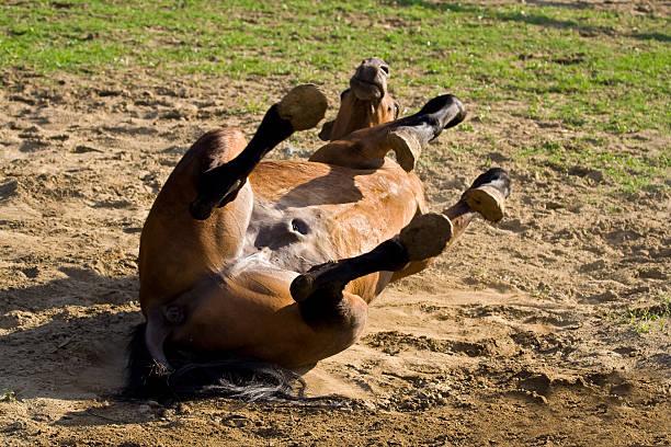 Cavallo - foto stock