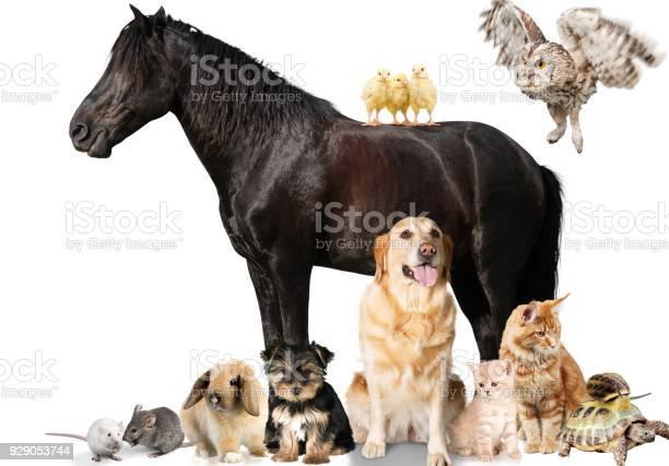 Horse picture id929053744?b=1&k=6&m=929053744&s=612x612&h=ymwpk2i d 2jf larnvk7u49 dyv jfwe6p0ydblzz8=
