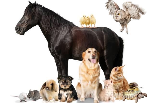 Horse picture id929053744?b=1&k=6&m=929053744&s=612x612&w=0&h=ovz29f6ktb821bf5tstvd1yf fis03dgjw nypwnqf8=