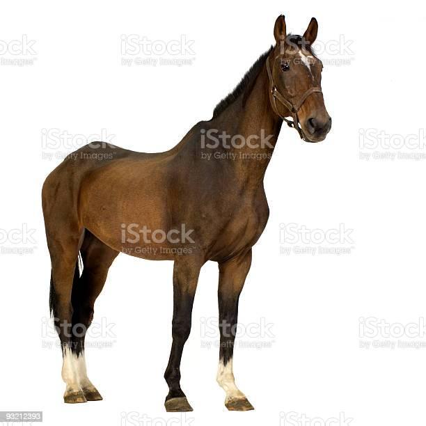 Horse picture id93212393?b=1&k=6&m=93212393&s=612x612&h=incvu1l5nicljpgks3omvwiepwa9ryrya jucw4sr 0=