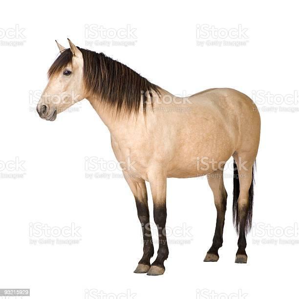 Horse picture id93215929?b=1&k=6&m=93215929&s=612x612&h=e7njsuy9zhamb16qxxdcnxvo63hlwjls3oeatmjtt4c=