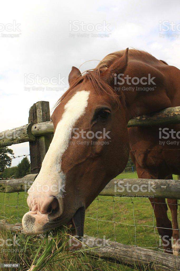 Horse royalty free stockfoto