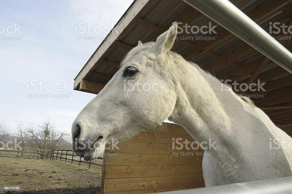 Cavallo foto stock royalty-free