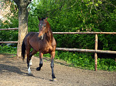 istock Horse playing in the paddock 685907578