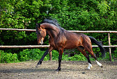 istock Horse playing in the paddock 685907582