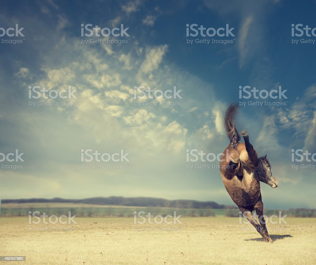 horse plays on background of an autumn field and  sky stock photo