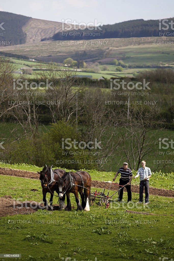 Horse plowing royalty-free stock photo