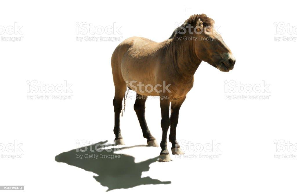 Horse pony stock photo