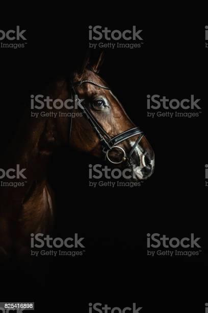 Horse portrai picture id825416898?b=1&k=6&m=825416898&s=612x612&h=moigo85nc1tvgyfin5iyhgchefzujeal986byaci71w=
