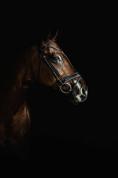 Horse portrai stock photo