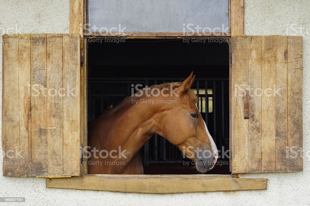 Horse portrait 1 stock photo