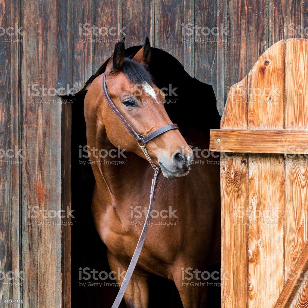Horse portrait closeup stock photo