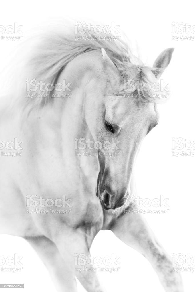 Horse portrait high key stock photo