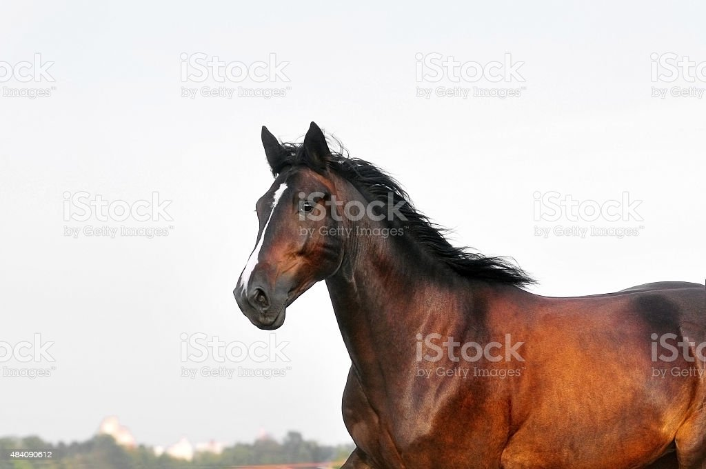 horse portrait in action stock photo