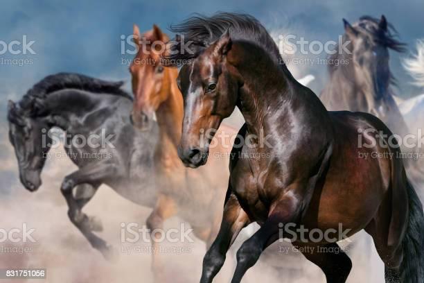 Horse portrait in herd picture id831751056?b=1&k=6&m=831751056&s=612x612&h=6lgagfq96coma rcmi31oyy8owrht4iuzoszn3ah0yo=