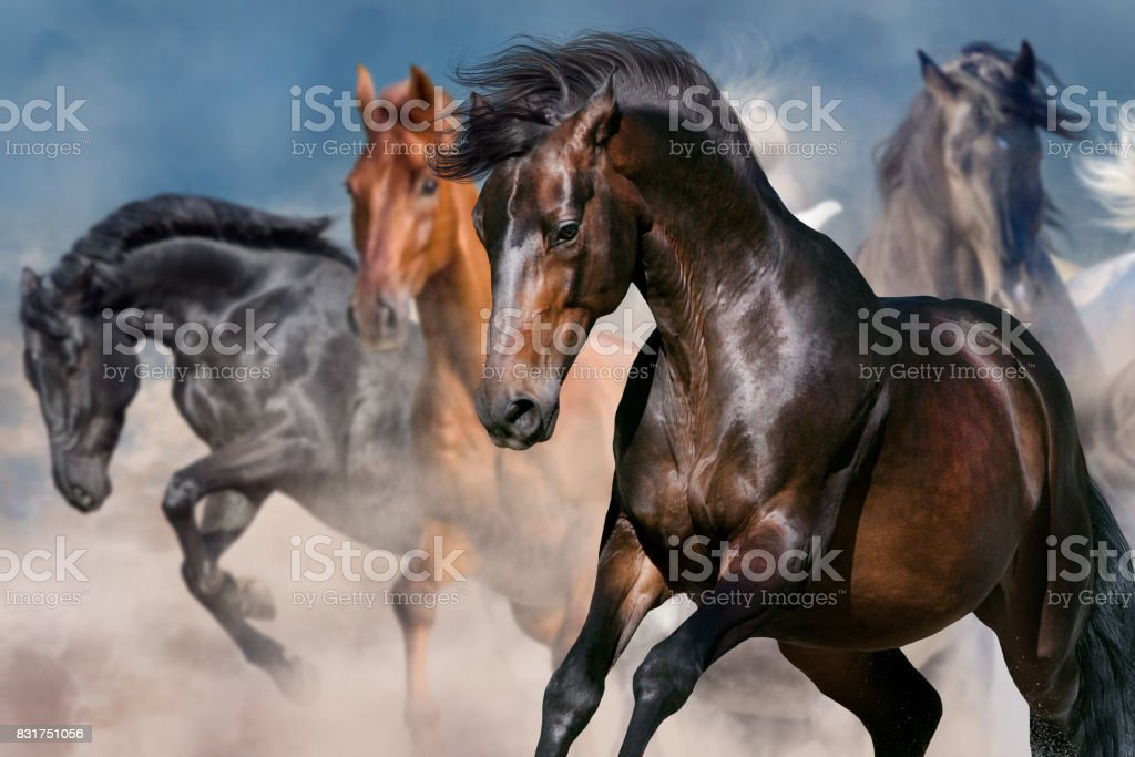 Horse portrait in herd stock photo