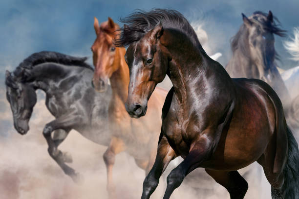 horse portrait in herd - wildlife stock photos and pictures