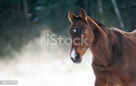 istock Horse portrait in winter 854164678
