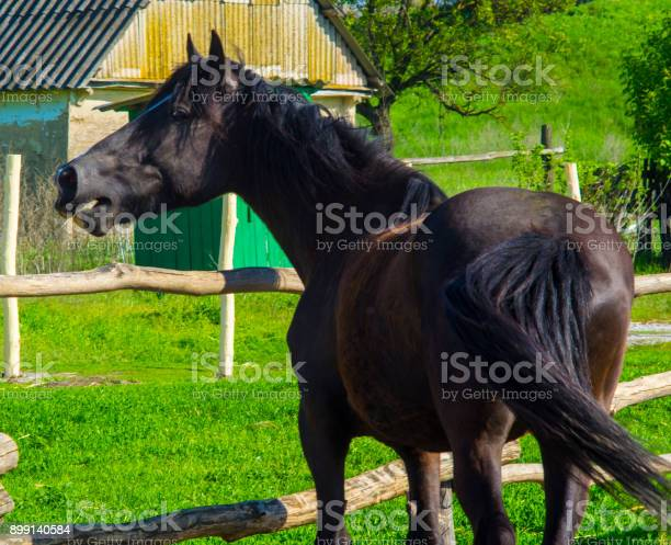 Horse portrait of a running horse picture id899140584?b=1&k=6&m=899140584&s=612x612&h=17adcomck0tudaw jwmf6xfpldvoimrisxpshgv6u u=
