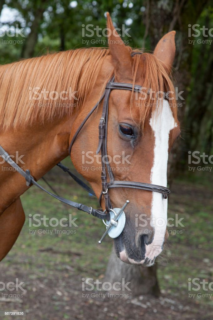 Horse portrait on a farm in summer stock photo