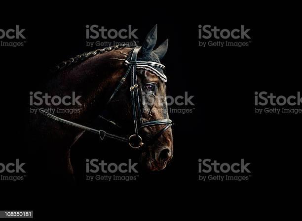 Horse portrait picture id108350181?b=1&k=6&m=108350181&s=612x612&h=n5u dmogr kd4fs3enhd08muaghzql2rdzk74pqsa3o=