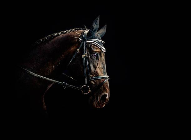 horse portrait - paard stockfoto's en -beelden