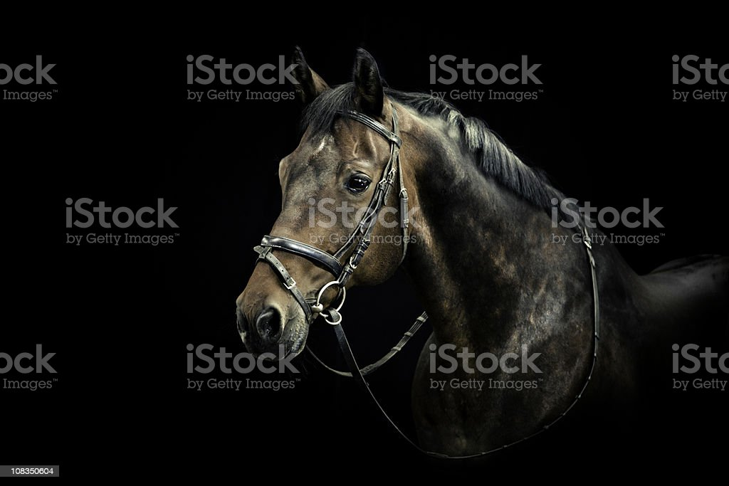 Horse Portrait stock photo