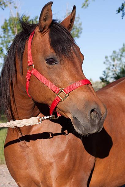 Horse portrait picture id182900468?b=1&k=6&m=182900468&s=612x612&w=0&h=g3qfgai3ee7n3wp4lmizmicisxp3qnts95vjatzj8t0=