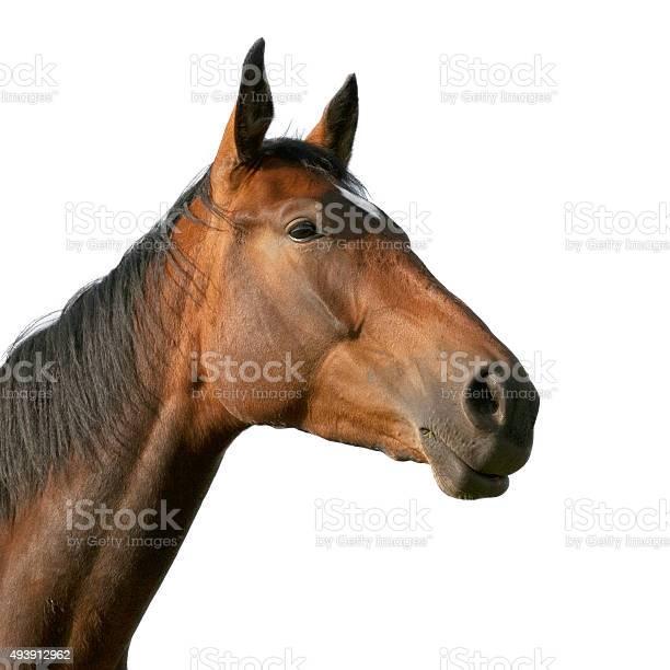 Horse portrait picture id493912962?b=1&k=6&m=493912962&s=612x612&h=z0d6q1r26f9e8sg65yqddut5ffzceysdfzhbpandmoc=