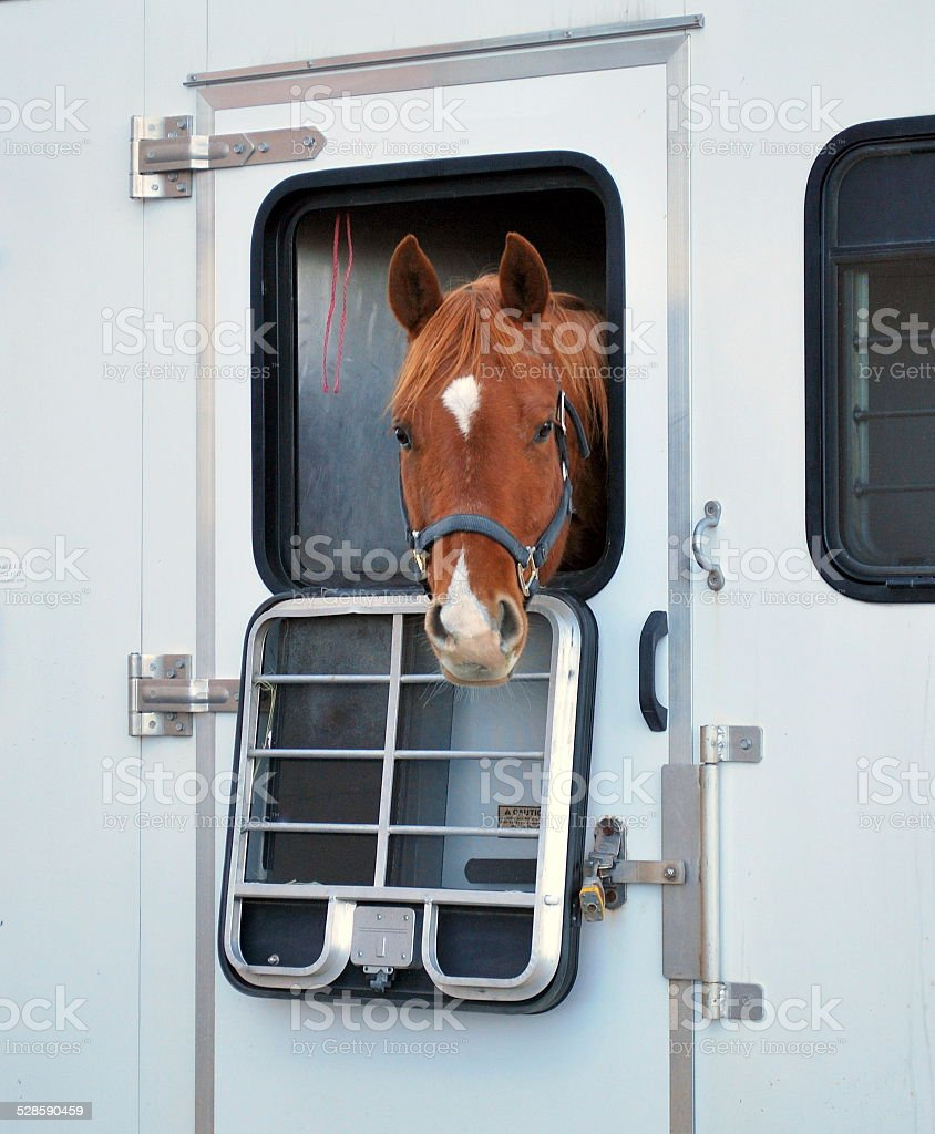 Horse portrait. stock photo