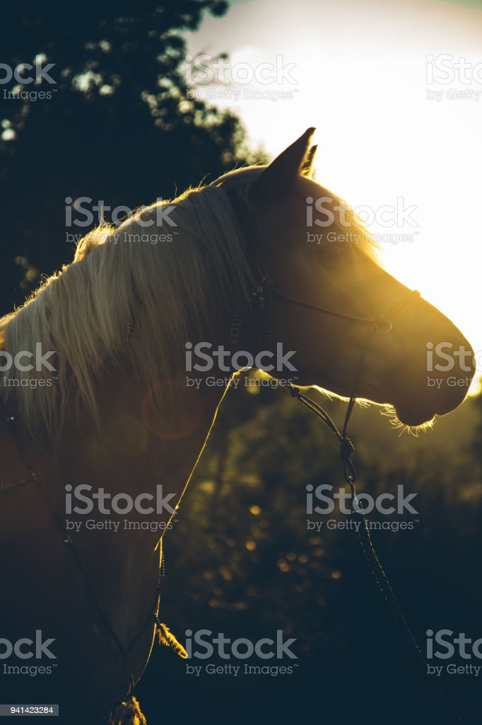 Pferd Porträt – Foto