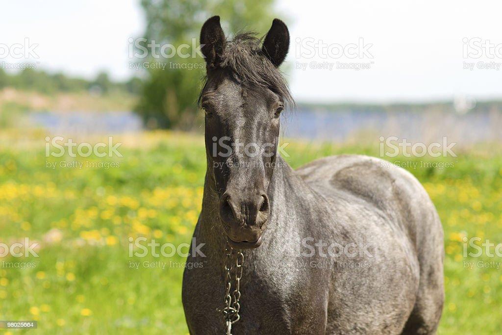 horse portrait royalty-free stock photo