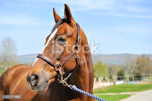 istock Horse Power! 1202771631