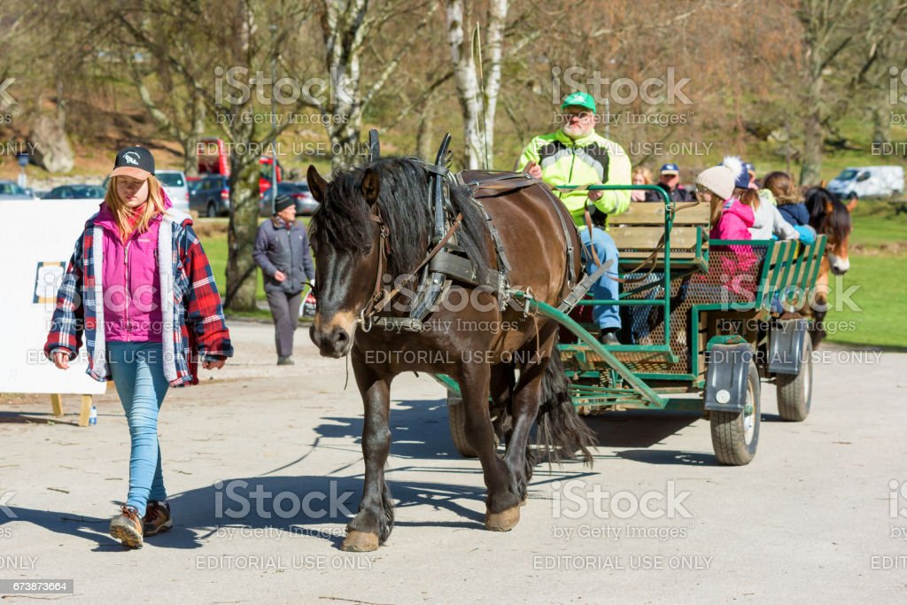 Horse pulling visitors stock photo
