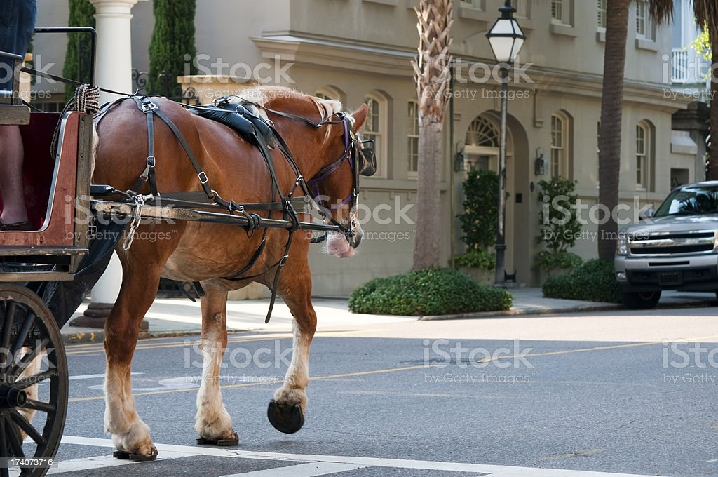 Horse-drawn carriage in Charleston, South Carolina stock photo