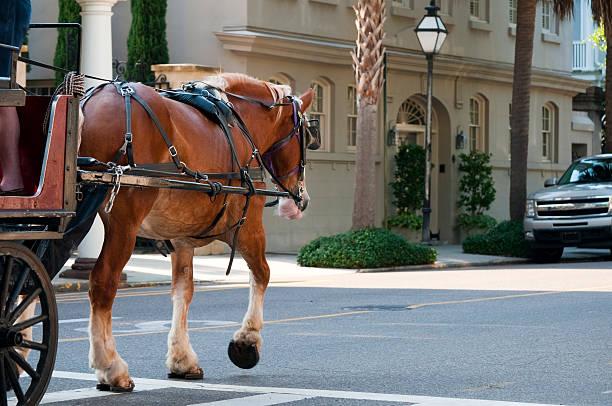 kutsche in charleston, south carolina - pferdekutsche stock-fotos und bilder