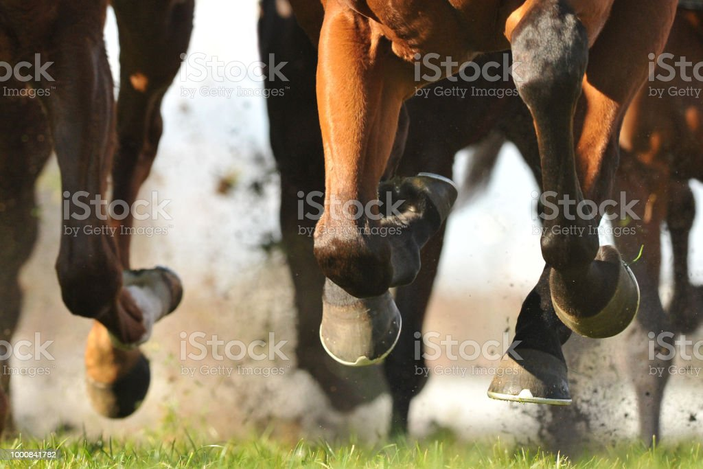 Horse racing action Horse racing action, hooves, legs and grass flying Activity Stock Photo